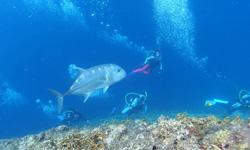 サンゴ カヤマ北