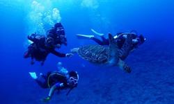 サンゴ ヤスラギ